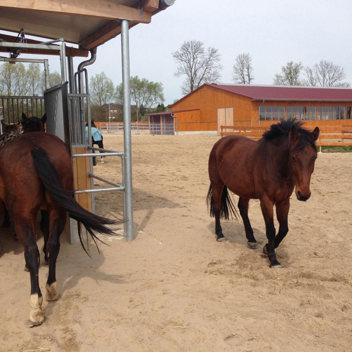 icon-respect-du-comportement-des-chevaux-100x100 Ecurie active