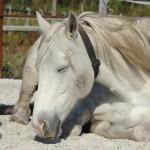 ecurie-active-chevaux-en-groupe-equi-libre-40 Equi libre 40