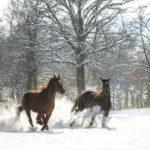ecurie-active-Lo-Vardiafs-haute-savoir-equin-plus Ecurie Lo Vardiafs
