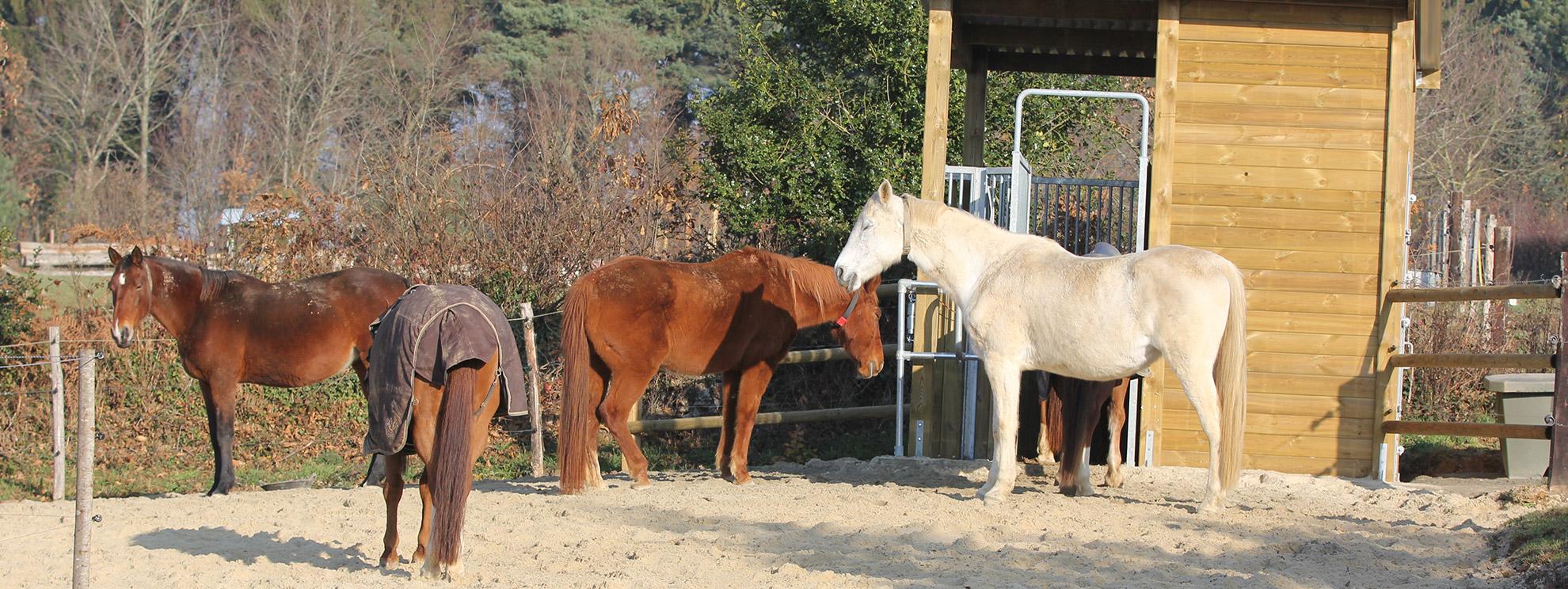 ecuries-actives-de-land-rohan-2 Domaine Equestre de Land Rohan